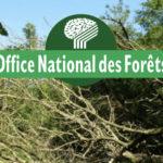 Connaître l'Office National des forêts